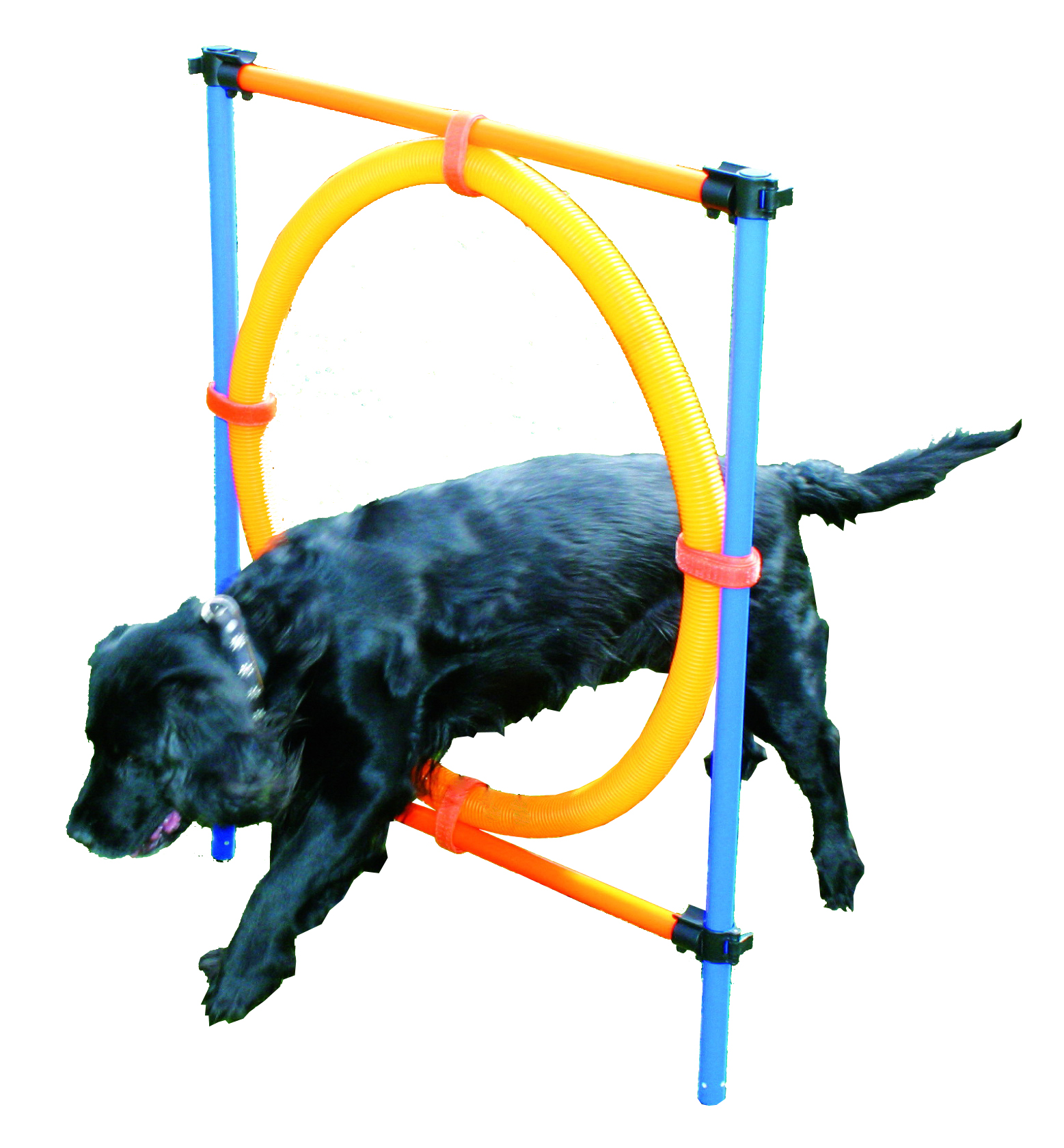 Agility Ring