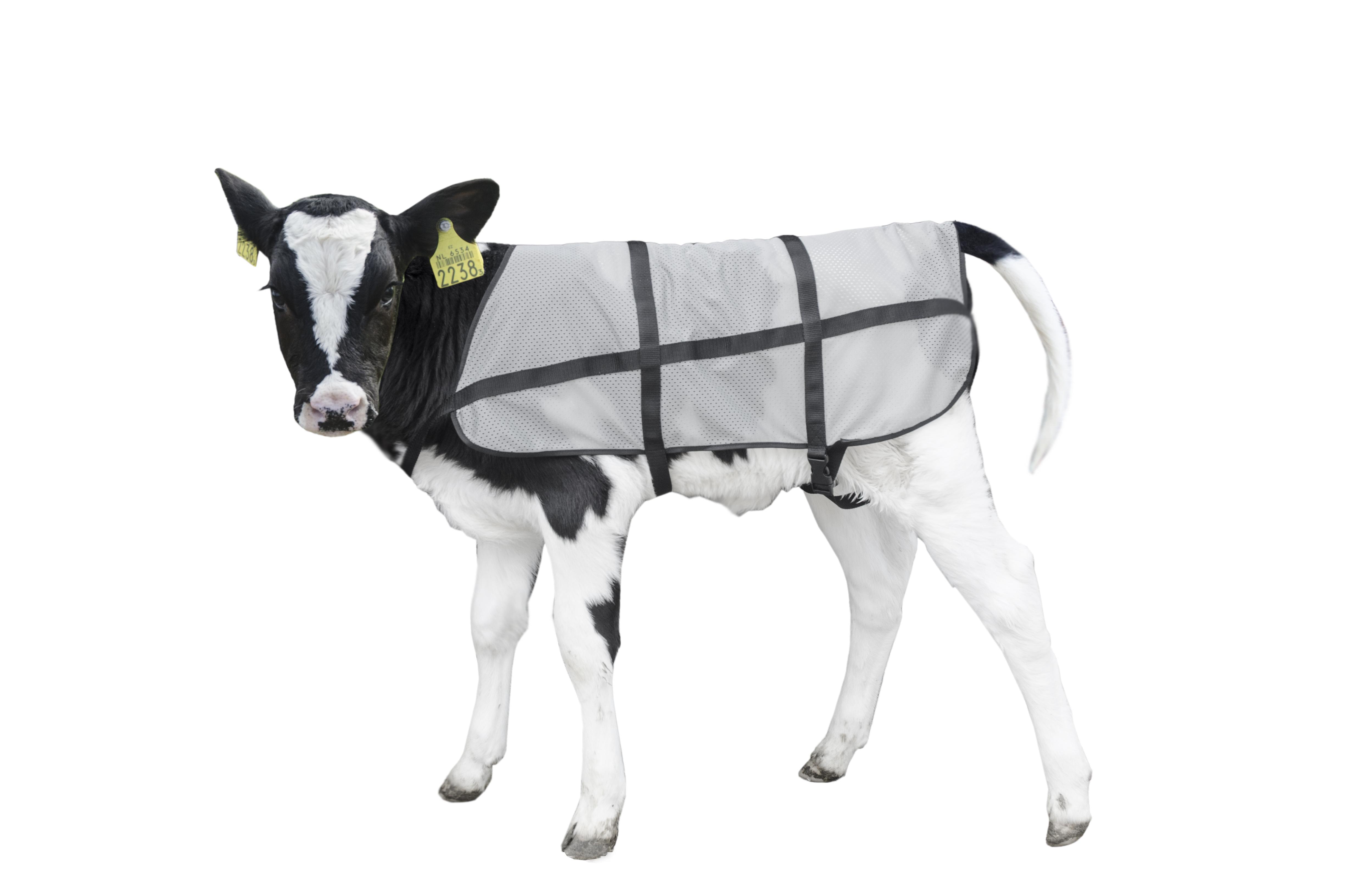 Bodyguard Calf Summer blanket