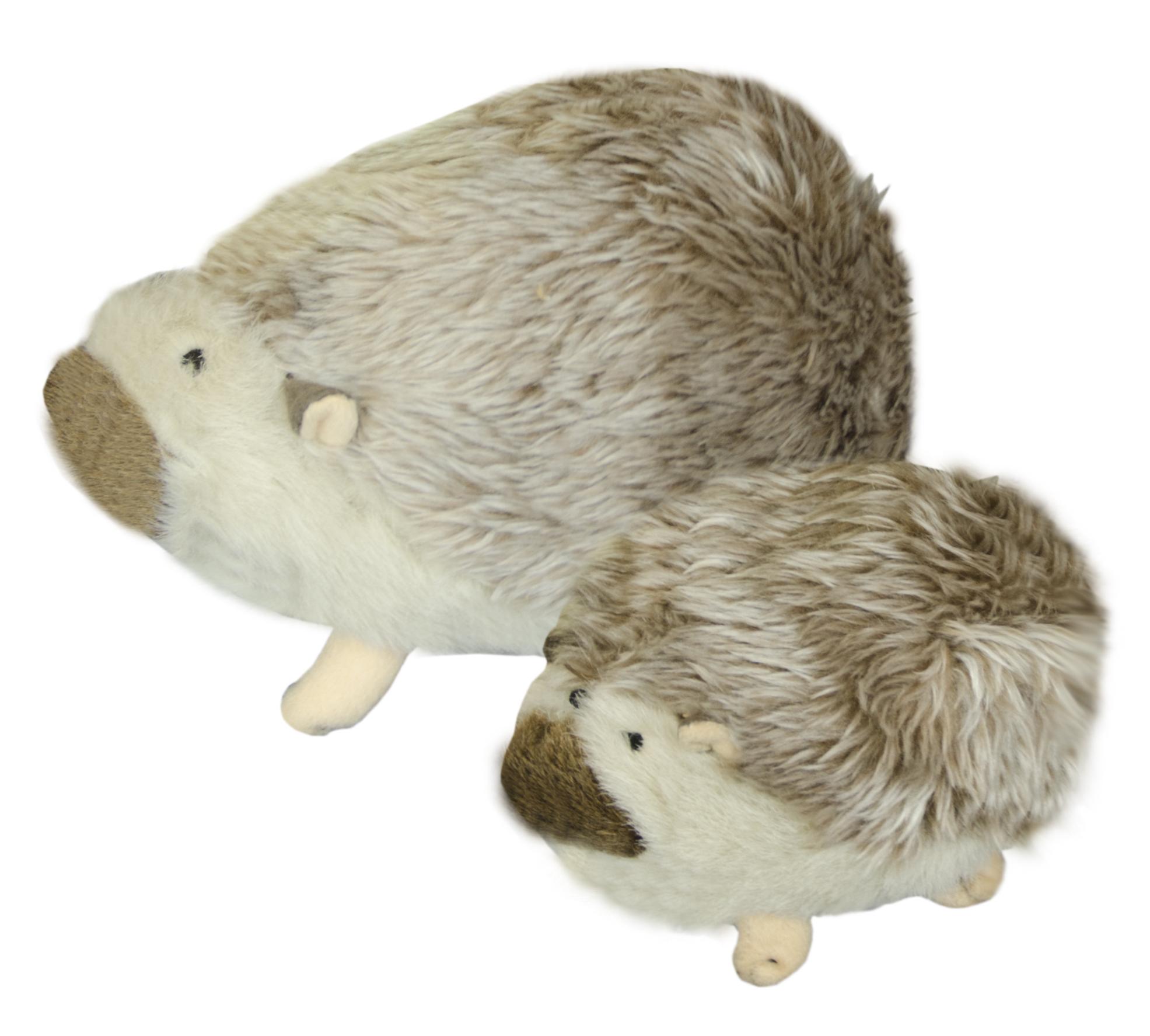 American Wild Hedgehog Large